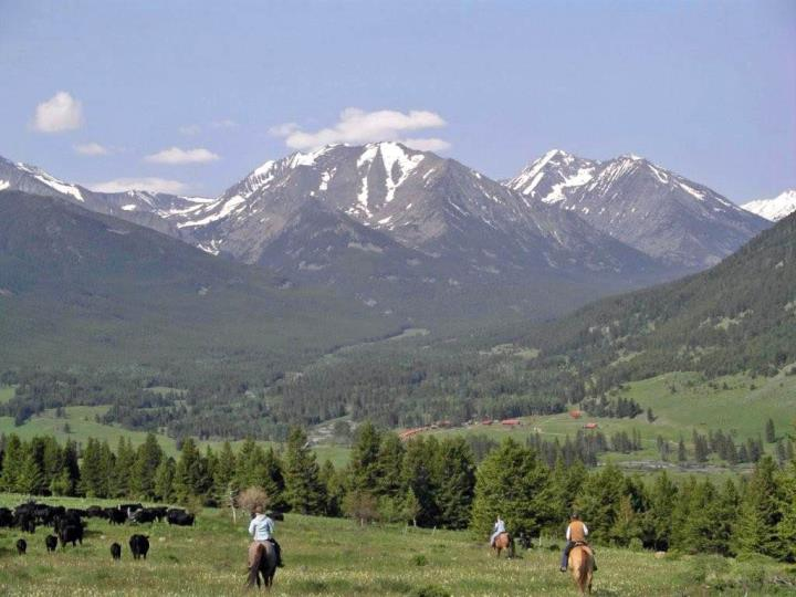 montana cattle drives