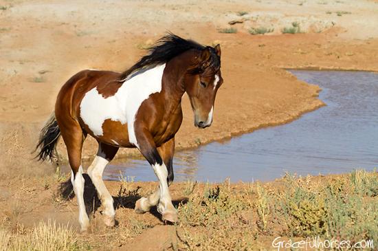 Manuela Stefan Meets The Wild Mustangs Of Wyoming