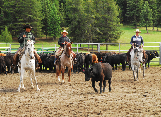 McGinnis Meadows Montana Horsemanship