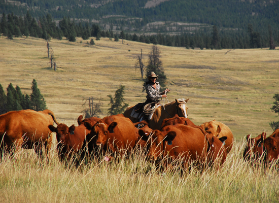 McGinnis Meadows Montana Cattle Drive