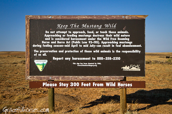 Wild mustang rules in Wyoming