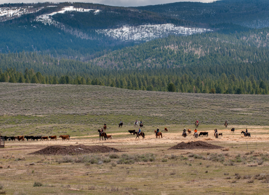 Paws Up Cattle Drive Montana
