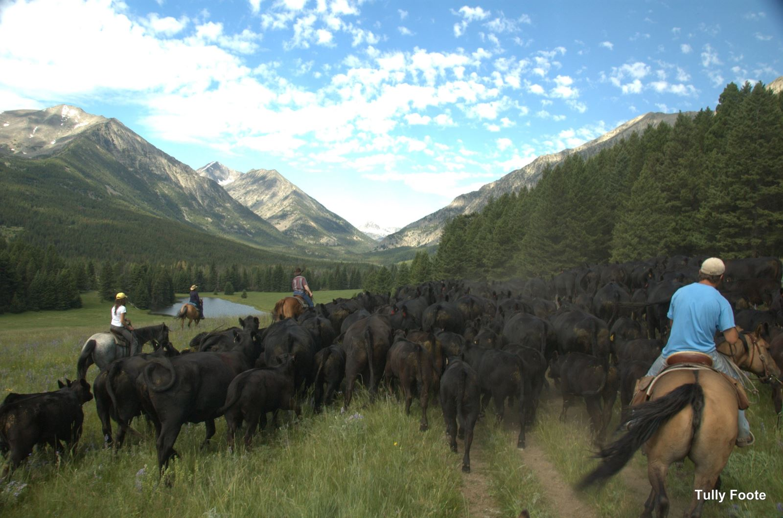 cattle drive vacations