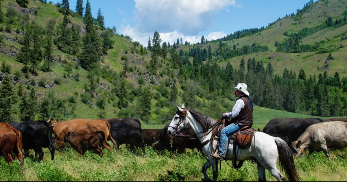 Bull Hill Ranch Washington Usa Guest Ranch Vacation